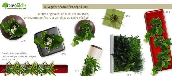 cadres-vegetaux-noel