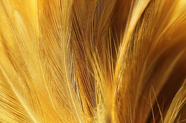 fibre écolo plumes de poulet textile naturel