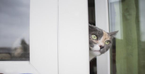 astuces bien-être, hiver, chat, fenêtre