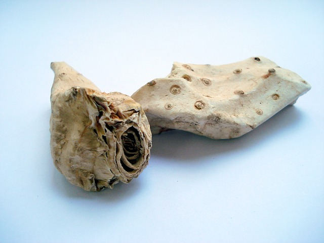 racines-iris-dents