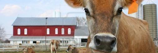 "AWA, la viande certifiée ""bien-être animal"""