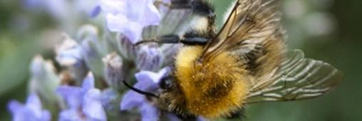 Protégeons l'apiculture : 17 associations disent stop aux OGM