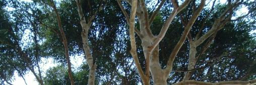 Brazil Forest : la forêt brésilienne comme placement financier durable