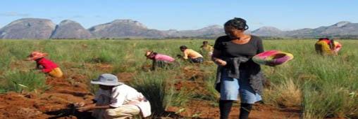 Une plantation Tree Nation à Madagascar