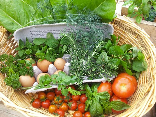 bébé locavore, panier de légumes