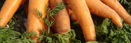 Manger de saison en janvier : la fiche pratique