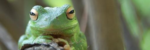 En 2011 : 18 000 nouvelles espèces ont été découvertes