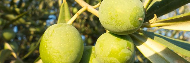 Fraude alimentaire. L'huile d'olive mieux que la cocaïne