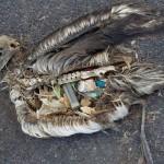 invasion de plastique