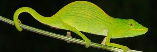 Toujours plus d'espèces menacées à protéger (diaporama)