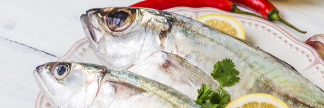 Le chinchard, un poisson en sursis