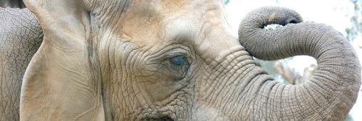 Cameroun : 200 éléphants victimes du braconnage