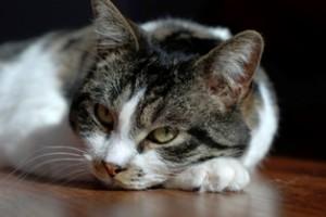 chat-sieste
