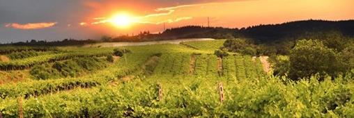 Le label vin bio européen