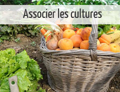 associer-les-cultures
