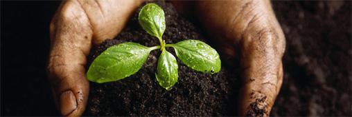 phosphates plantes