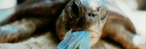 100 fois plus de plastique dans l'océan Pacifique