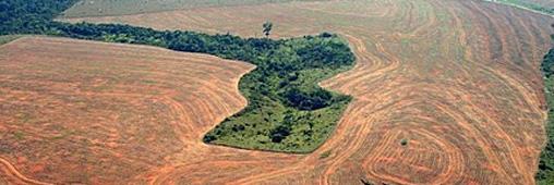 Stop au massacre à la tronçonneuse en Amazonie