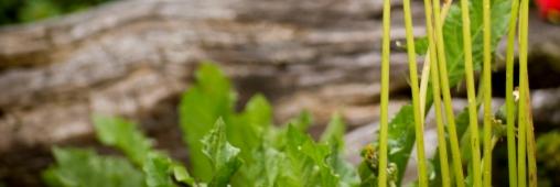 Pour jardiner et décorer, préférez les solutions vertes !