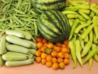 amap panier legumes