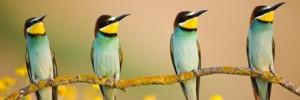 Concours photo du festival de l'oiseau et de la nature : un palmarès de haut vol !