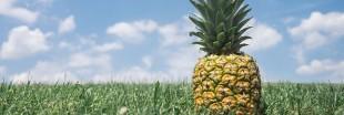 Recette bio : quinoa à l'ananas
