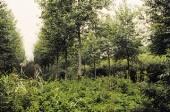 sylviculture bois français