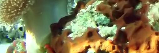 La grande barrière de corail bientôt classée comme patrimoine en danger