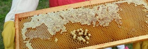 Récolte de miel sur le toit d'une école