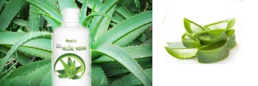 Jus d'Aloe Vera : allié cosmétique et bien-être