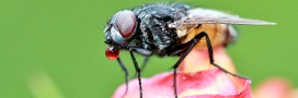 10 astuces naturelles pour chasser les mouches !