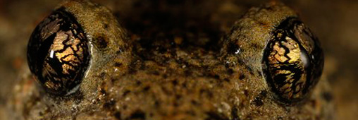 Concours photo par Nature : le projet planète grenouille l'emporte