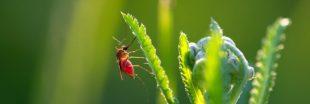 Les plantes odorantes du jardin contre les moustiques