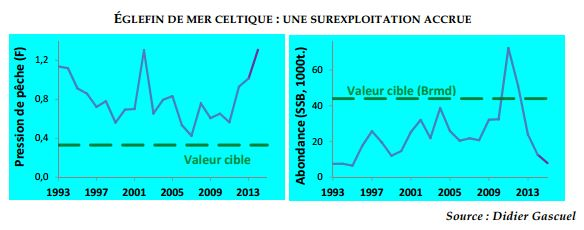 variation-stocks-eglefin