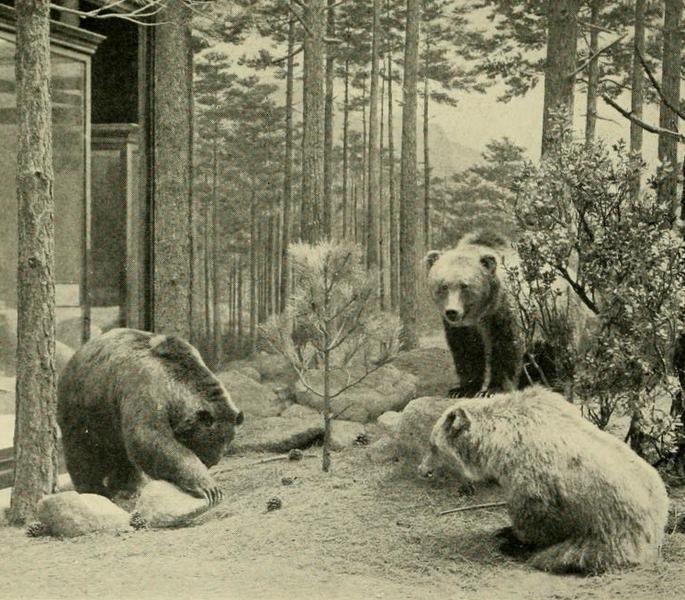 espèces-animaux-disparus-crapaud-doré-grizzly-mexicain