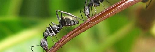 3 recettes contre les moustiques et les insectes. Black Bedroom Furniture Sets. Home Design Ideas