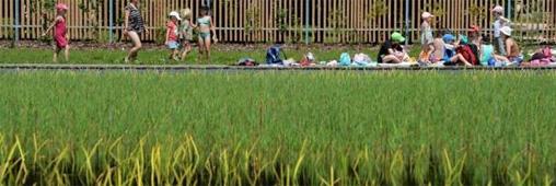 Piscines naturelles publiques : les collectivités françaises font le grand saut