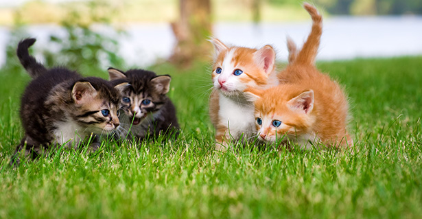 animaux de compagnie stériliser stérilisation chaton chiot vacances
