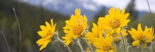 Cet été, apprenez à cueillir les fleurs sauvages de montagne