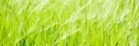 Jardinage : la méthode Fukuoka