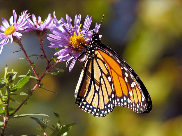 jardin-fleurs-papillons