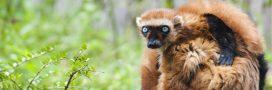 10 espèces se battent contre leur extinction grâce aux zoos [Diaporama]