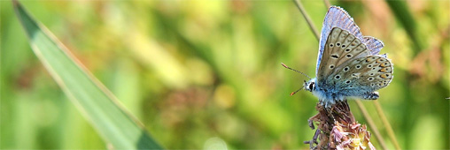 La biodiversité négligée