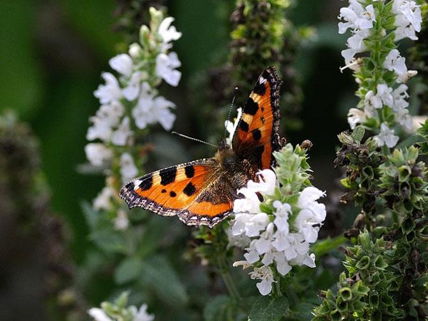 papillons-jardin-fleurs