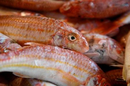 Le rouget barbet le petit rouge consommer avec mod ration for Nom poisson rouge