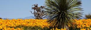 Économiser l'eau : le xéropaysagisme ou le jardinage sans eau