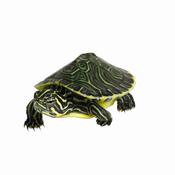 tortue-aquarium
