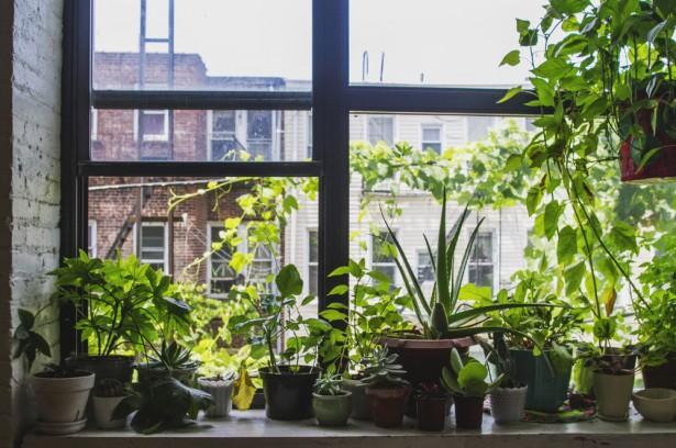 windowfarm