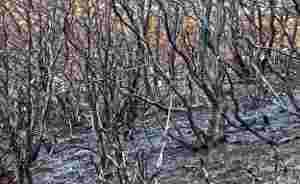patagonie incendies déforestation