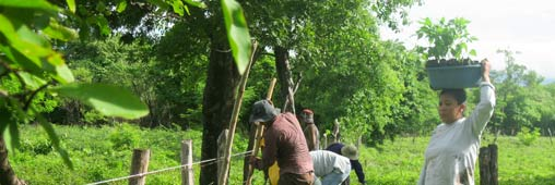 Une nouvelle plantation Tree Nation au Nicaragua